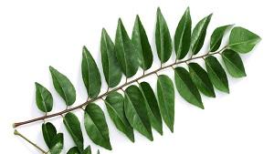 8 Superb Advantages of Curry Leaf