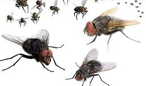 5 Simple Tips to Get Rid of Houseflies