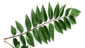 8 Superb Advantages of Curry Leaf
