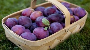 Aloo Bukhara Benefits (Plum Benefits in Urdu)