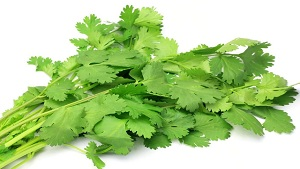 Amazing Benefits of Coriander Leaves (Hara Dhania)