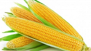 Amazing Corn Benefits for Health