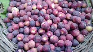 Falsa Ke Fayde | Grewia Asiatica (Phalsa) Health Benefits