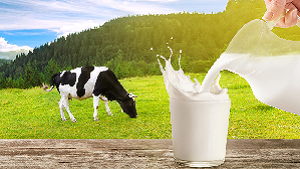 Gay ka Doodh ke fayde | 5 Benefits of Cow Milk