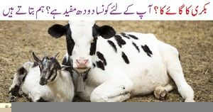 Goat Milk vs Cow Milk