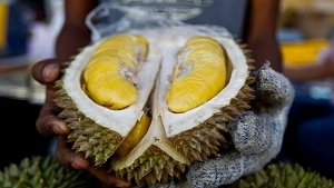 Rare Durian On Sale For Rp14 Million Goes Viral