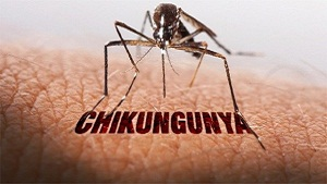 What is Chikungunya Virus? Prevention and Diagnosis Tips
