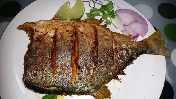 Golden Pomfret Fry