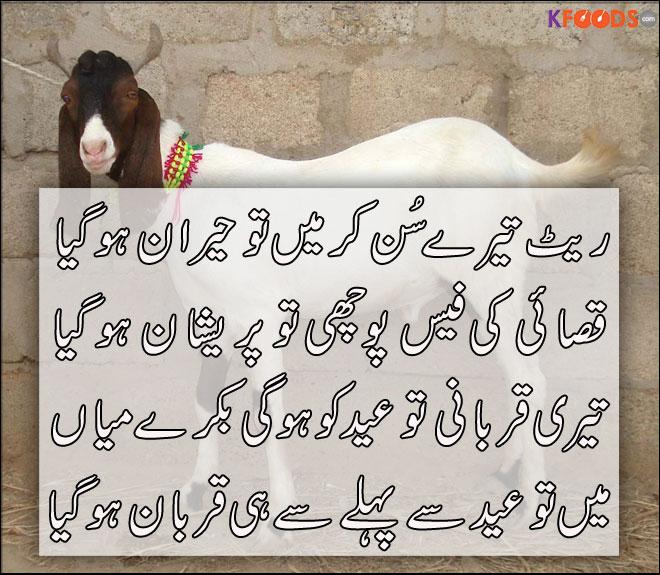 Eid ul Adha Qurbani   Bakra Eid 2014