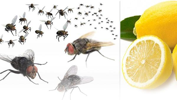 Tips to Get Rid of Flies