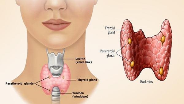 5 Minutes Thyroid Exercise