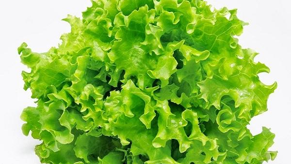Lettuce Meaning in urdu سلاد | Salad meaning in english Lettuce